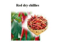 Peperoncini rossi essiccati dello Sri Lanka